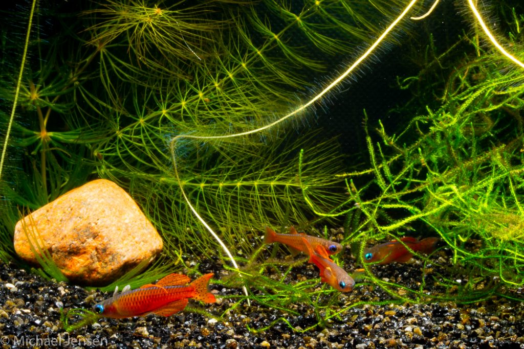 Several fish with plants in an aquarium